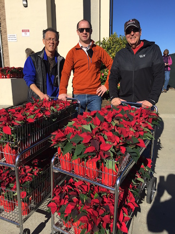 VA Poinsettias (1)